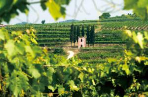 充满春日气息的葡萄酒