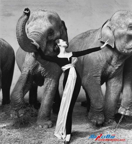 美国 理查德·阿维顿《朵微玛与大象》